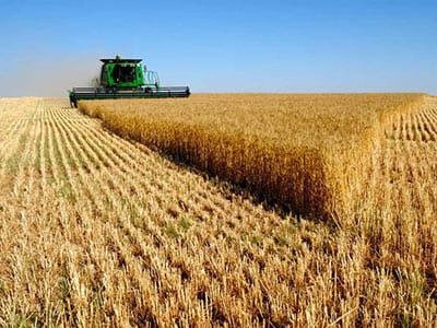 باسکول-کشاورزی-و-زراعت